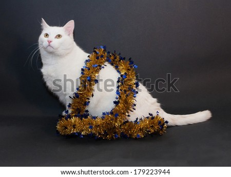 Thick white cat with yellow eyes sitting on black background with Christmas garland of golden stars on neck - stock photo