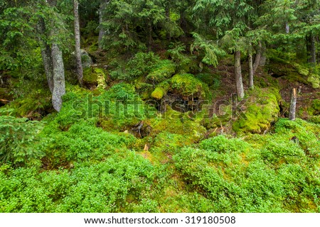 Thickets of moss in the Carpathian forest - stock photo