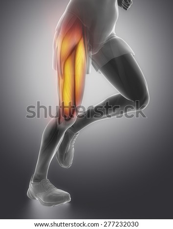 Thigh man muscle anatomy - stock photo