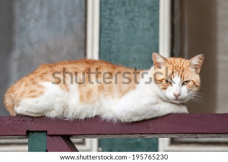Thin and neglected ginger and white tabby cat with eye problem lying on a railing looking at the camera - stock photo