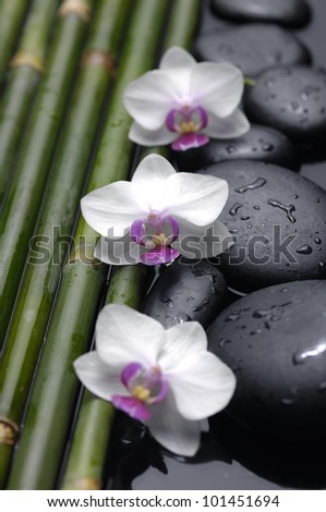 Thin bamboo and orchid flowers on wet pebble stones - stock photo