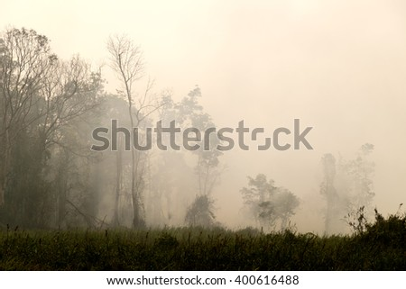 Think haze due to forest fire - stock photo