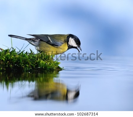 Thirsty bird. - stock photo