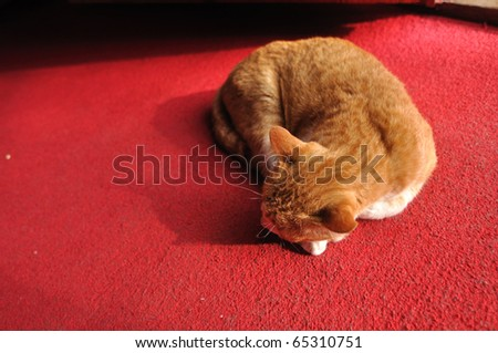 This cat is sleep in a red carpet - stock photo