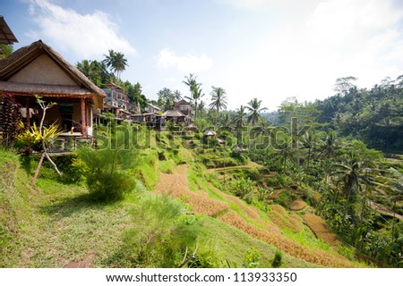 This image shows Ubud Rice Terraces, in Bali - stock photo