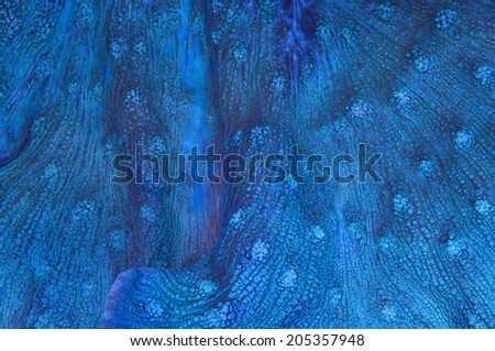 This is a blue chalice coral with multiple mouths. - stock photo