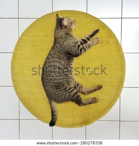 This is a cat on the floor - stock photo