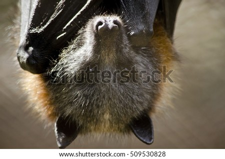 this is a close up of a bat
