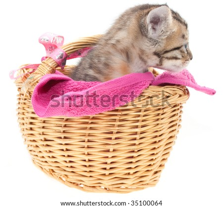 This is a gray kitten in a brown basket