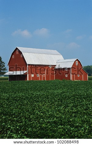 This is a Midwest farm. It has a red barn and corn growing in the field. - stock photo