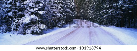 This is a snow covered winter road in the Yosemite Valley. The road curves to the left and the trees are covered in snow. There are tire marks on the snowy road where cars have driven over the snow. - stock photo