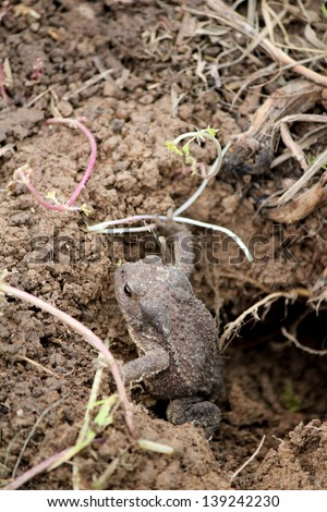 This is a toad in the pit in the summer - stock photo