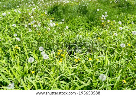 This is a yard full of weeds. - stock photo