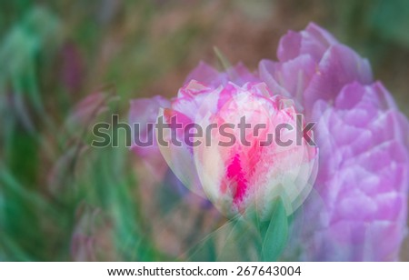 This is an abstract multi-exposure photograph of the tulips growing a garden in Asheville, NC. A beautiful place to visit in the spring.  - stock photo