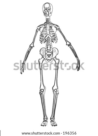 This is an computer generated image of a skeleton.