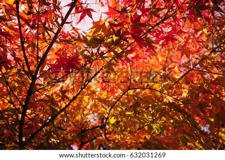 https://thumb1.shutterstock.com/display_pic_with_logo/167494286/632031269/stock-photo-this-is-autumn-leaves-in-the-japanese-garden-632031269.jpg