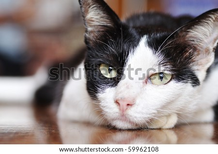 This is Cat in the temple of Thailand - stock photo