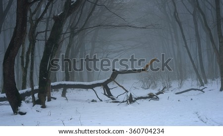 This is gloomy morning in Caucasus forest in winter - stock photo