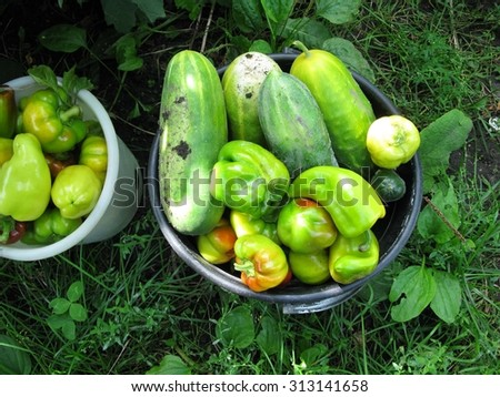 This is  harvest of cucumbers and pepper in round capacity - stock photo