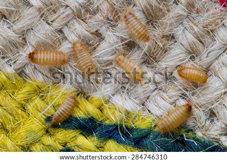 This is Khapra beetle on the outside of a burlap bag