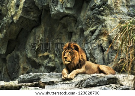 This is lion - stock photo