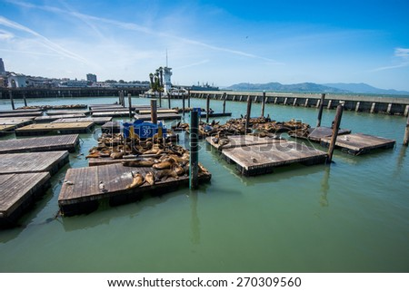 This is PIER 39 and the sea lions in San Francisco. - stock photo