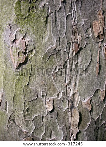 This is some bark up close.