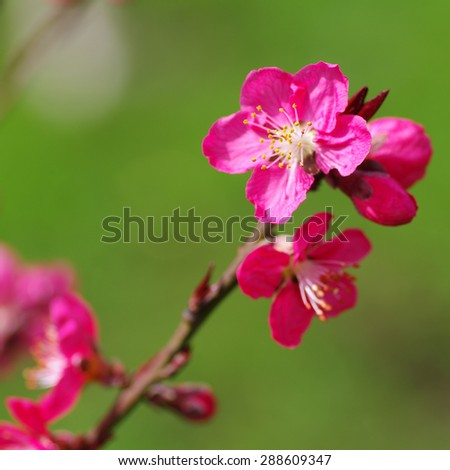 This is sun blossom in the peach blossom spring.