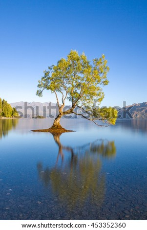 This is supposedly the most photographed tree in New Zealand it's a lone tree that at certain times of the year is surrounded by water.