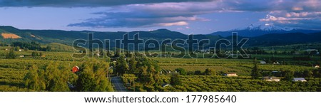This is the Hood River Valley. It is the Valley view with Mount Hood in the background. - stock photo