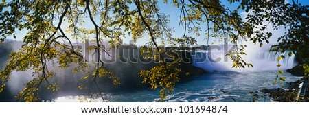 This is the Horseshoe Falls with an overhanging tree. It is the view from Canada. - stock photo