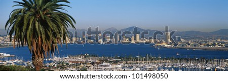 This is the San Diego Bay and harbor. There is a large palm tree to the left and many boats moored in the harbor. - stock photo
