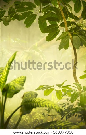 This misty tropical jungle scene would make a great background a variety of projects. - stock photo
