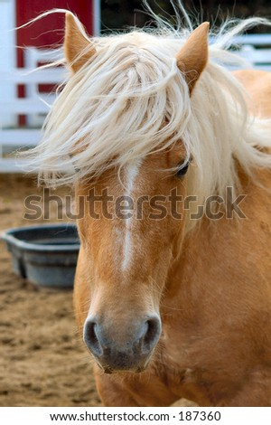 This photo is of a horse on a small farm with a great dispassion.
