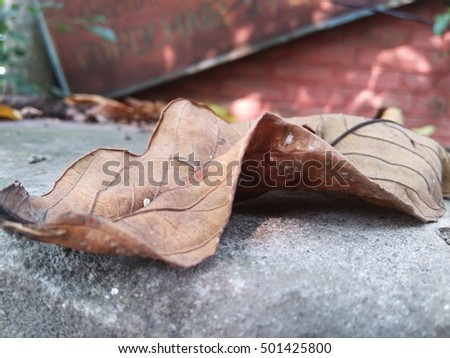 this photo is taken when a leaf fallen down on the street