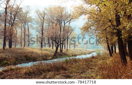 This photo shoot in autumn day time. - stock photo