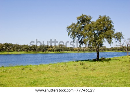 This photo shows a landscape of Alentejo, a region of Portugal.
