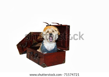 This pooch plans on going places.  She is wearing an old fashioned ladies hat with a beaded collar.  She is yawning sitting inside open suitcase.