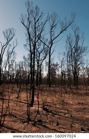 This scene, comprising parched earth and burnt trees, was captured following the recent bushfires in New South Wales, Australia - stock photo