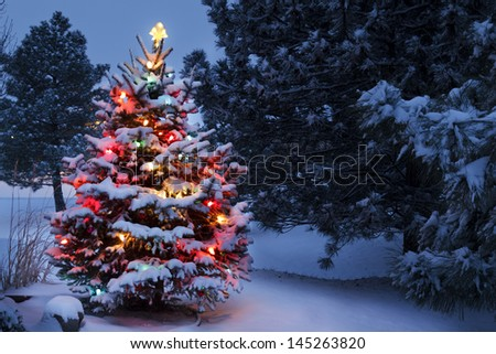 This Snow Covered Christmas Tree stands out brightly against the dark blue tones of early morning light in this winter scene. - stock photo