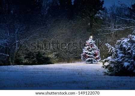 This Snow Covered Christmas Tree stands out brightly against the dark blue tones of this snow covered scene. The light almost appears magical as it illuminates the surrounding scene. - stock photo