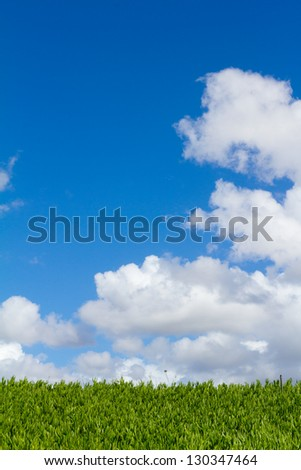This unique abstract image shows a hedge of tropical vegetation plants and some blue sky along with clouds. This is a great image for copyspace and design purposes. - stock photo