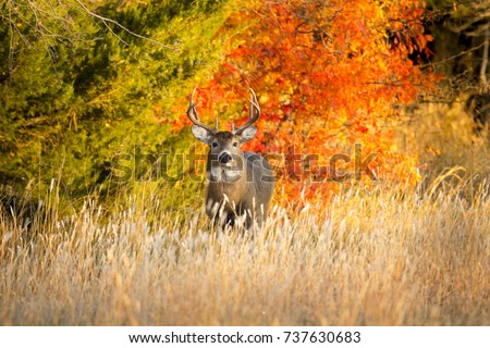Bucks Stock Images Royalty Free Images Amp Vectors