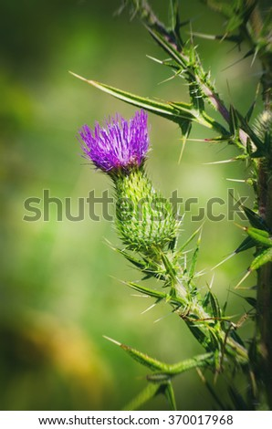 Thistle Over Natural Background - stock photo