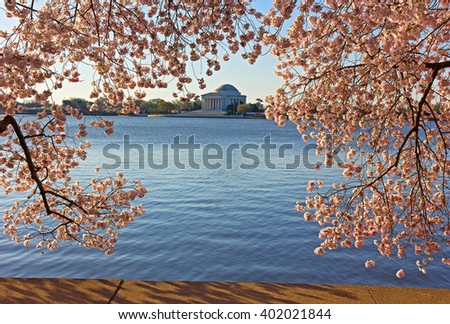 Thomas Jefferson Memorial framed in cherry flowers at Tidal Basin in Washington DC. Cherry blossom festival in US capital in spring. - stock photo