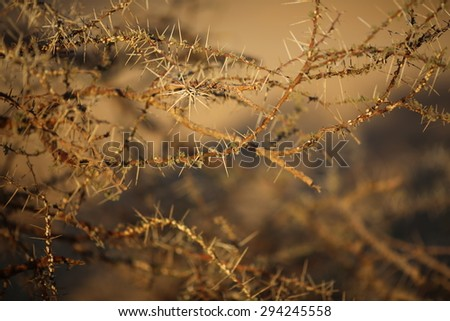 Thorn background - stock photo