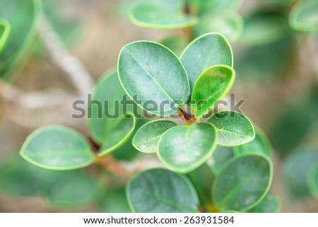 Thorn of green top plant - stock photo