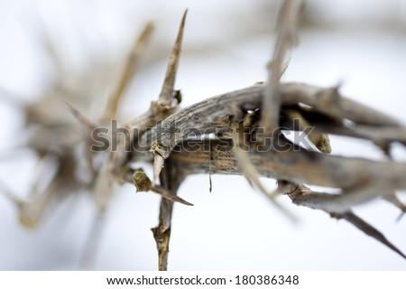 Thorns - stock photo