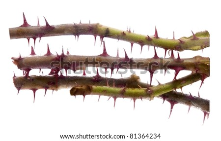 Thorns isolated on white - stock photo