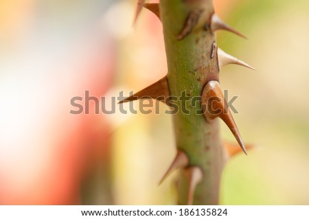 Thorns on the rose - close up. - stock photo